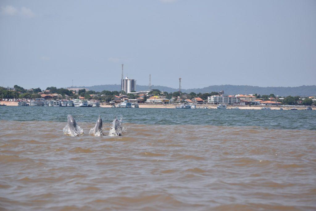 Gambar 4. Tiga Lumba-Lumba di Sungai