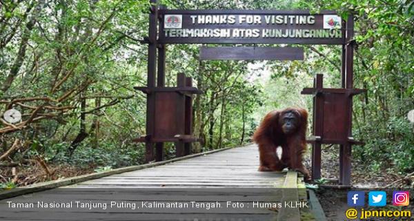 Taman Nasional Tanjung Puting, Surganya Orangutan