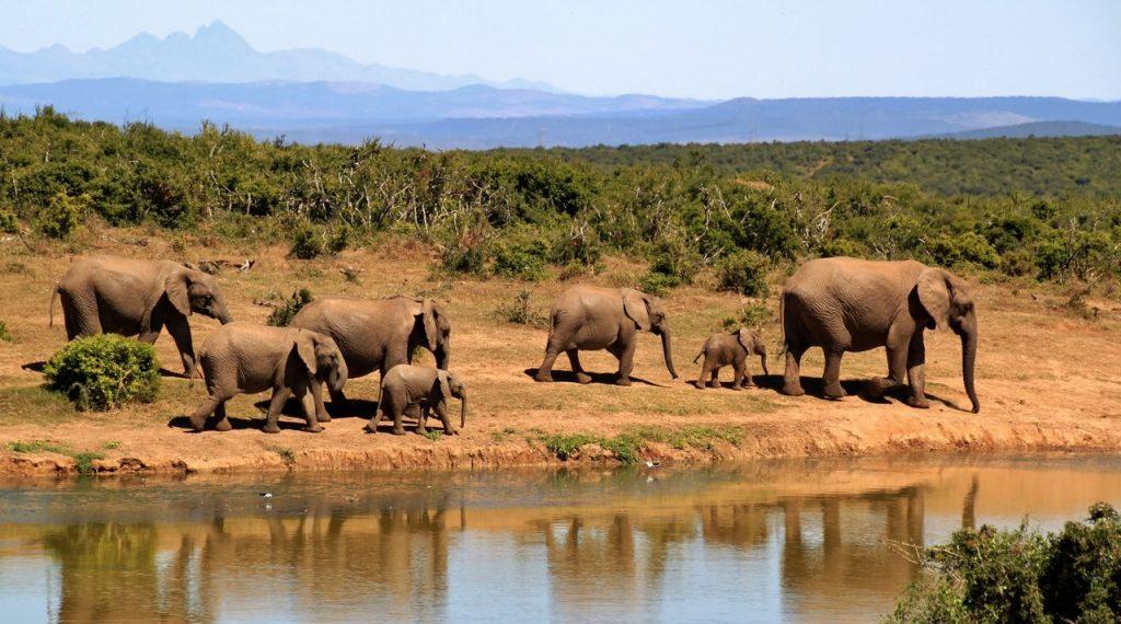 Gambar 2.Rombongan Gajah