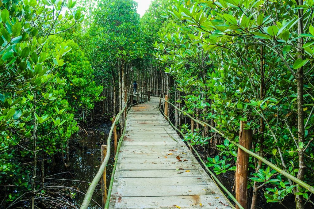 Gambar 3. Ekowisata Hutan Mangrove