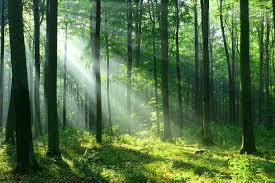 Gambar 1: Ekosistem hutan