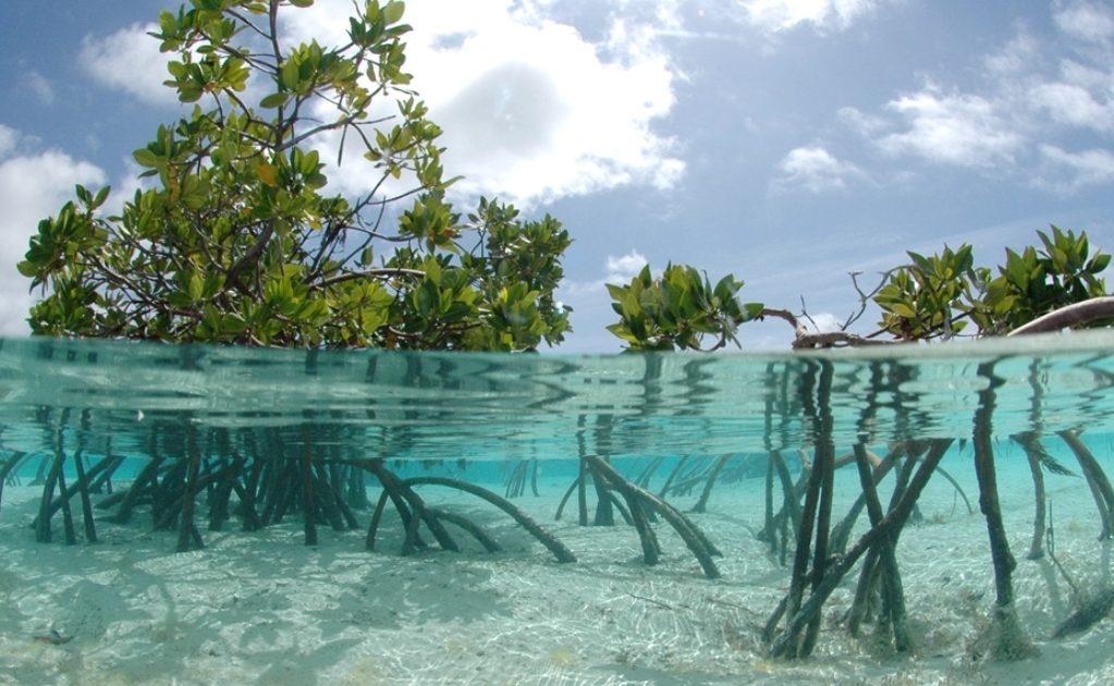 © mangrovemagz.com