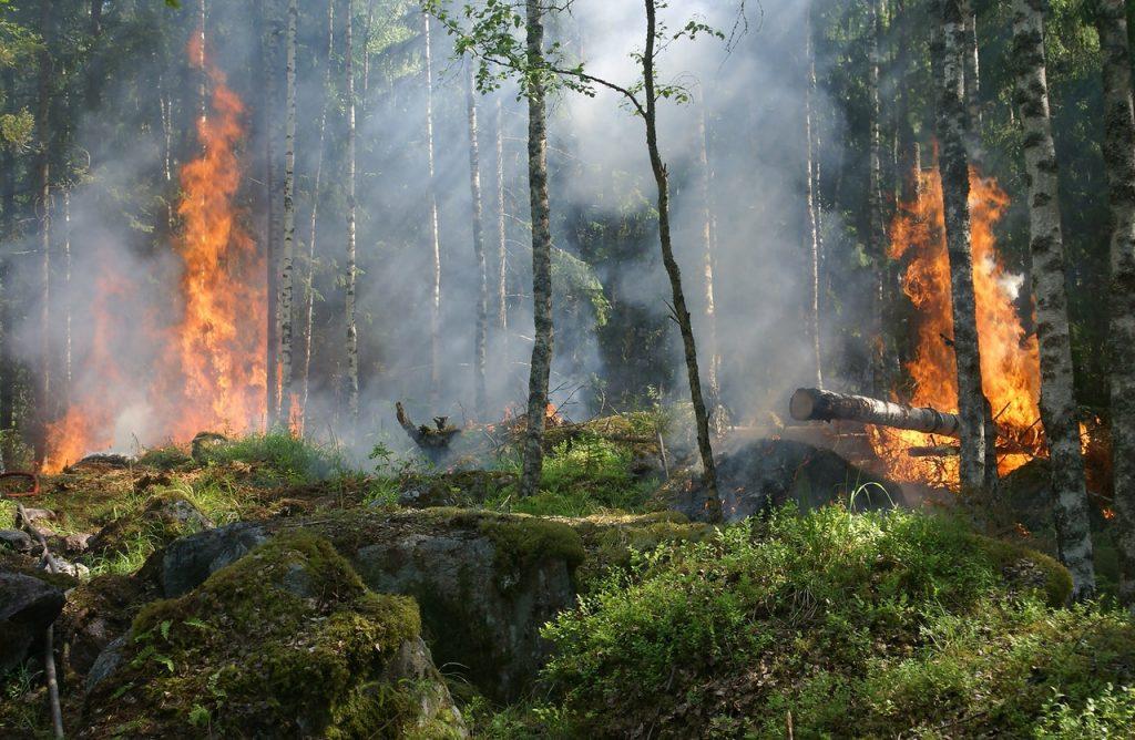 Gambar 2. Hutan Terbakar
