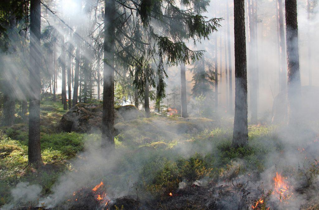 Gambar 3. Kebakaran Hutan Akibat Ulah Manusia