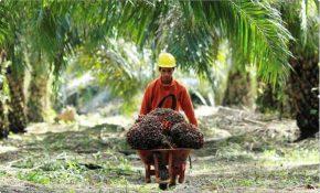 Gambar 2: Prospek Bisnis Kebun Kelapa Sawit