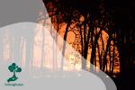 Mengapa Kebakaran Hutan di Indonesia Terus Menghantui?