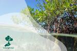 Mangrove dan Perannya bagi Biota Laut