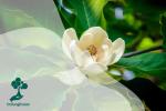 Mengenal Tumbuhan Angiospermae