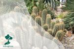 5 Adaptasi Morfologi Pada Tumbuhan
