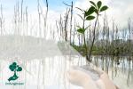 Mengapa Kita Perlu Menjaga Ekosistem Pesisir?