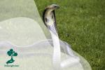 Dunia Reptil
