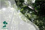 Sustainable Forest Management (SFM) Untuk Indonesia