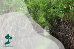 Hutan Mangrove untuk Lingkungan di Pesisir Jakarta
