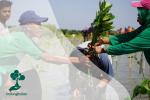Milenial Dan Mangrove: Dua Elemen Penting dalam Mencegah Perubahan Iklim