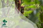 Mitigasi Konflik Satwa dan Manusia, Kunci Pencegahan Kepunahan Satwa