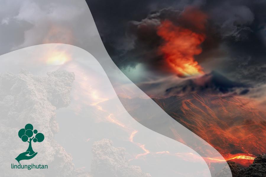 Letusan Gunung Api Bagi Kehidupan Hewan dan Tumbuhan