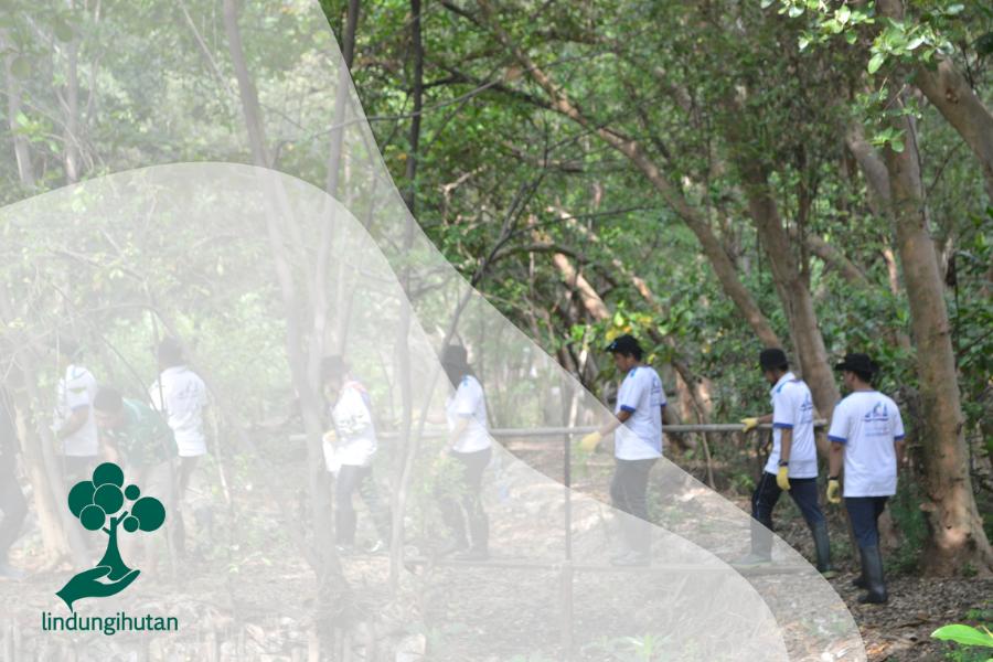 Mengenal Hutan Mangrove PIK di Jakarta