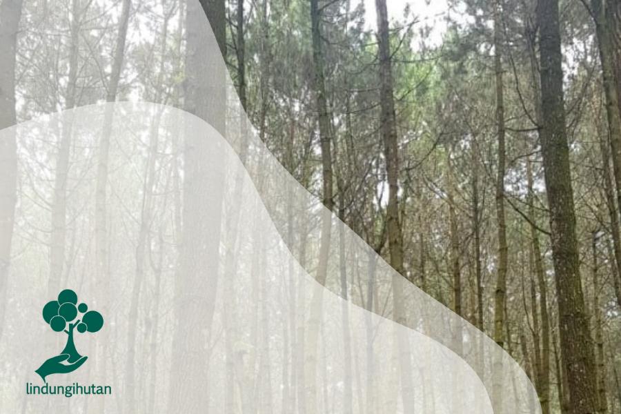Sisi Lain dari Hutan Pinus