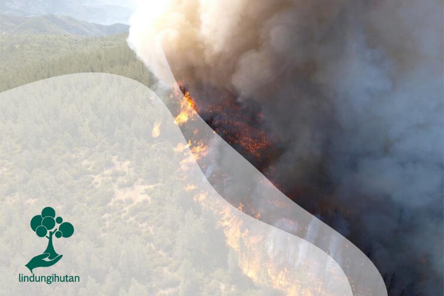Satwa Unik Penyeimbang Ekosistem dan Pendeteksi Bencana