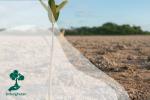 Cara Menanam Mangrove: Mulai Dari Pembibitan Hingga Perawatan