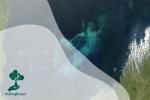 Fitoplankton, Si Penyumbang Oksigen Terbesar di Dunia