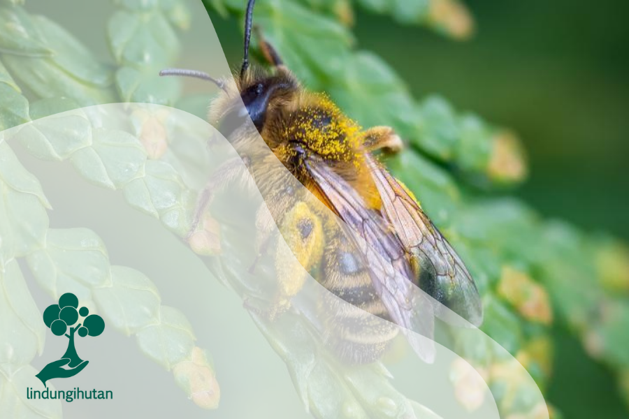 Kenali Spesies Lebah yang Kerap Membantu Penyerbukan Tanaman