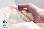 Neptune Balls: Solusi Alami untuk Membersihkan Laut dari Sampah Plastik