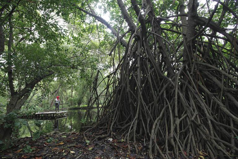 Hutan mangrove © mongabay.co.id