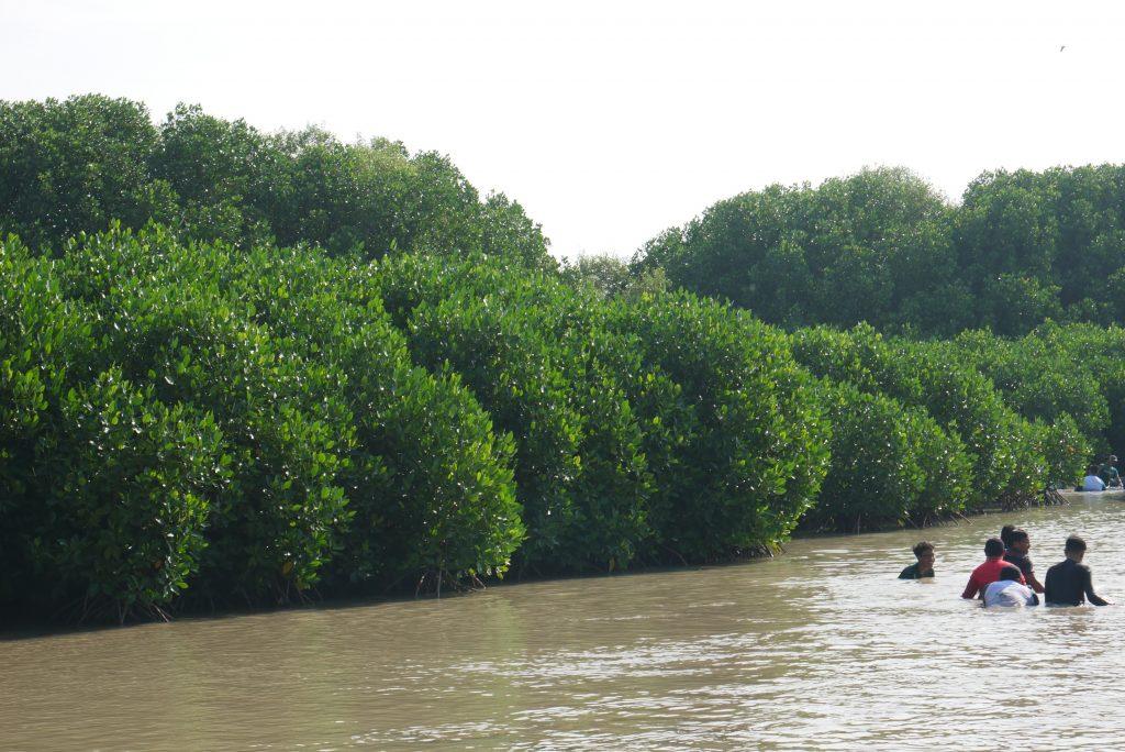 Perbedaan Mangrove dan Bakau