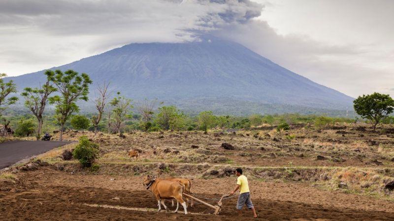 Gambar 4. Peternak dengan Sapi © BBC News