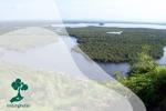 Hutan Konservasi di Pulau Kalimantan