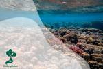 Apa Itu Taman Nasional Laut?