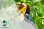 Yuk Kenali Burung Endemik Indonesia!