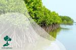 Menyiasati Peduli Lindungan Melalui Pembangunan Hutan Mangrove