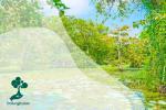 Mengenal Hutan Rawa di Indonesia
