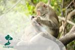 Peran Monyet Ekor Panjang dalam Menjaga Hutan
