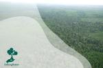 Hutan di Pulau Sumatera
