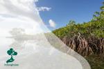 Aktivitas Asyik yang Dapat Dilakukan di Hutan Mangrove PIK (Pantai Indah Kapuk) Jakarta