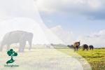 Pesona Taman Nasional Way Kambas, Rumah bagi Gajah Sumatera