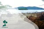 Peran Ekosistem Pesisir Penghasil Karbon Biru Tekan Kenaikan Emisi Karbon