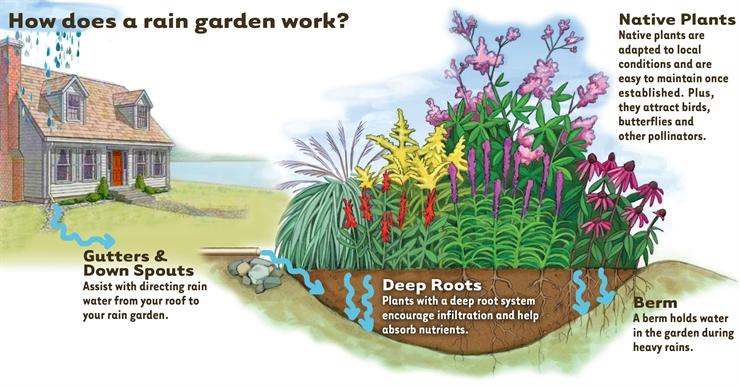 Gambar 4. Sistem Kerja Taman Hujan. Sumber: https://www.warrenswcd.com/rain-gardens.html