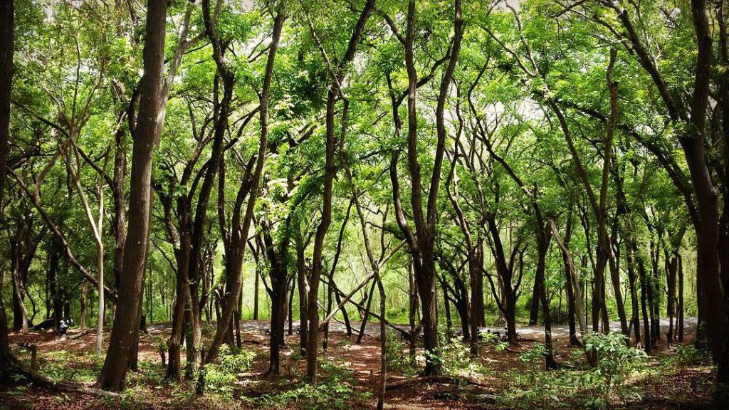 Gambar 2. Kawasan Hutan Lindung Suaka Margasatwa Sermo. Sumber: tuguwisata.com