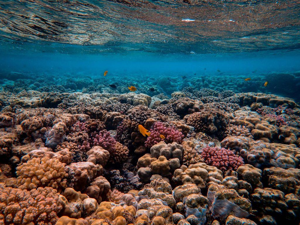Taman Nasional Laut