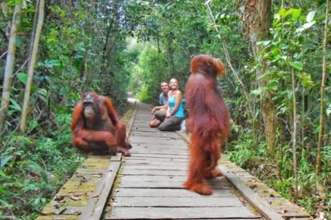 Taman Nasional Tanjung Putting