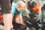 Berkebun di Rumah, Manfaat yang Wajib Kamu tahu!