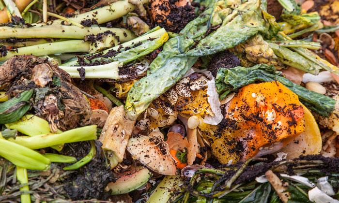 Limbah Makanan: Dampak Bagi Lingkungan