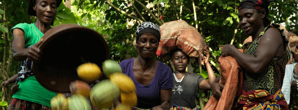 Gambar 3. Budidaya Tanaman Coklat. Sumber: fairtrade.org.uk