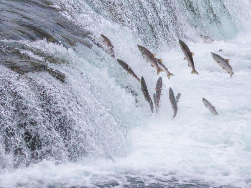Salmon © IDN Times