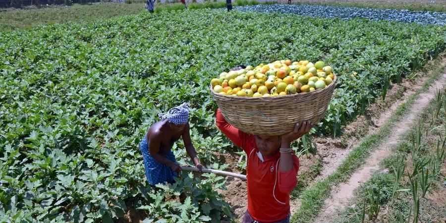 Gambar 3. Hasil Pertanian