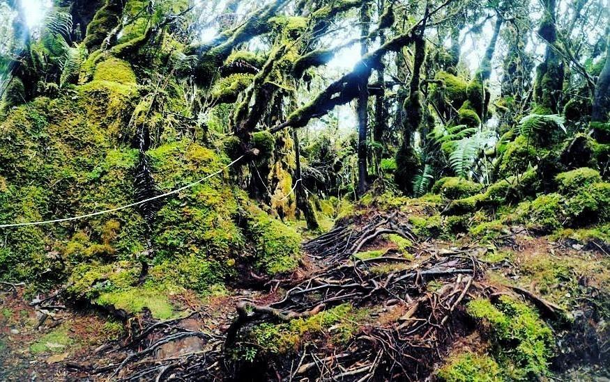 Jalur di area Hutan Lumut / jalanbareng.com